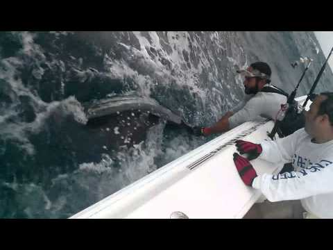 Dunsby pulling in a sailfish offshore Miami