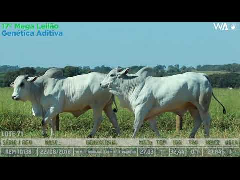 LOTE 71 - DUPLO - REM 10138, REMC A 2101 - 17º Mega Leilão Genética Aditiva 2020