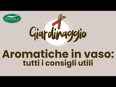Le aromatiche in vaso salvia rosmarino timo youtube for Erbe aromatiche in vaso