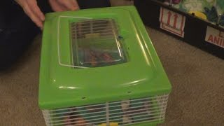 Unboxing of The Sugar Glider