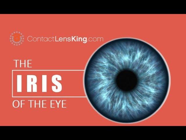 Iris eyes