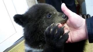 Медвежонок борец