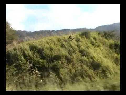 La Sepultura - De Arriaga a Tuxtla en Chiapas Mexico