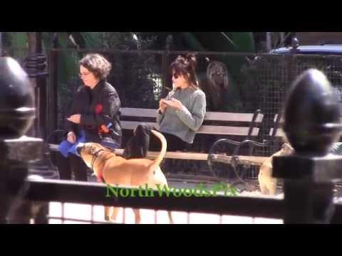 (Last Spring) Dakota Johnson takes her dog to the Washington Square Park Dog Park in New York City.