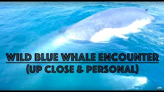 Blue Whale Encounter - Up Close & Personal! (Monarch Beach, Southern California)