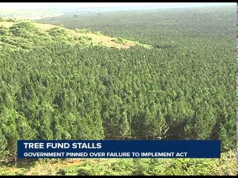 Implementing the Tree Fund in Uganda