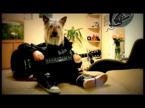 Happy Birthday Rock Song Dog Playing Guitar YouTube