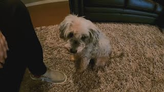 Dog Missing for Three Years Reunited with Family