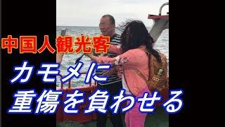 中国人観光客がカモメをおびき寄せたあとに重傷を負わせたとして批判を...