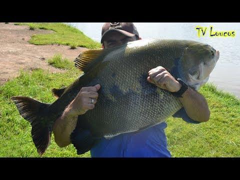 TV LOUCOS 63 - BARATÃO (PESCARIA DE GRANDES TAMBAS COM OS CAMPEÕES GOIANOS EM PESQUEIROS DA FISHTV)