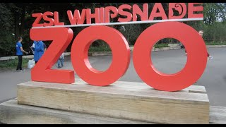 Lockdown Life 2 - Whipsnade Zoo