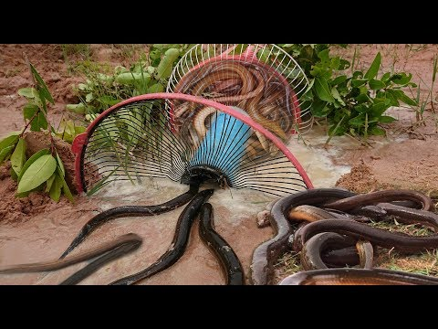 Thumbnail: Smart Girl Make Eel Trap Using Electric Fan Basket Trap To Catch A Lot Of Eels