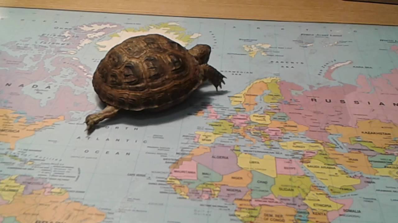 Домашний питомец (Выпуск 37) Черепахи. Модный приГАВор( РИА .
