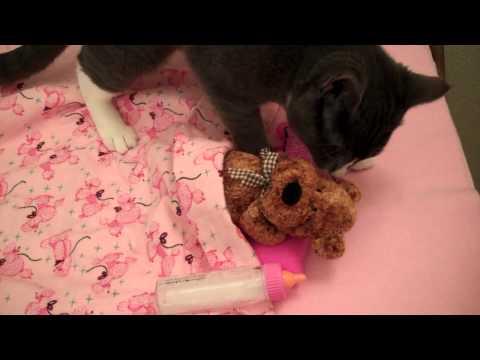Cute Kitty Gives Teddy Bear a Bath