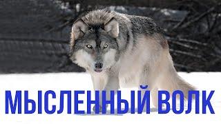 """Смысловые Галлюцинации. Сергей Бобунец. """"Мысленный волк"""" (cover)"""