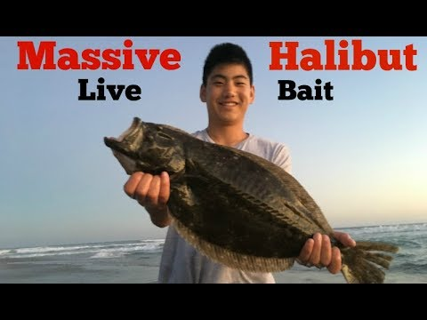Fishing for Spotties and Halibut with LIVE BAIT!!! Catch and Cook Halibut