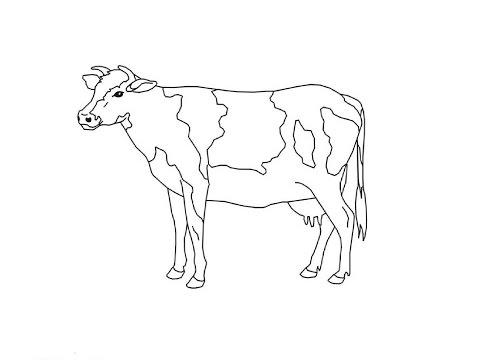 Как нарисовать корову видео