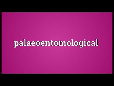 Header of palaeoentomological