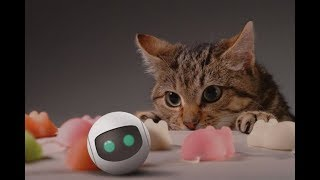 Awesome Cat Robots You Can Actually Buy