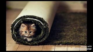 Короткое видео про котят
