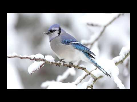 Hayley Westenra-Never Saw Blue(lyrics)