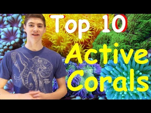 Top 10 Most Active Corals -for Reef Tanks