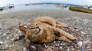 漁港に野良猫が座っていたのでナデナデしたら喜んで擦り寄ってきた
