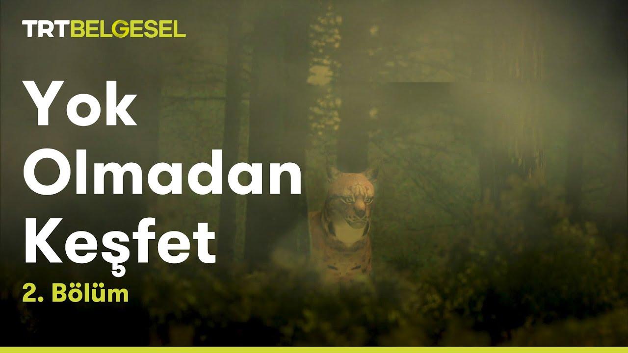 Yok Olmadan Keşfet - Vaşak Bölümü - TRT Belgesel