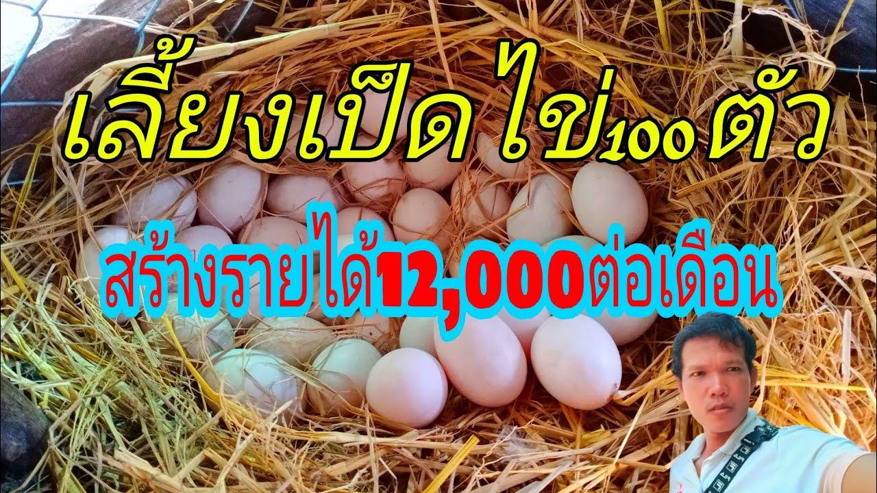 เลี้ยงเป็ดไข่100ตัว สร้างรายได้10,000-12,000บาท/เดือน