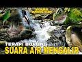 Terapi Air Mengalir Dan Suara Burung Alam Membuat Burung Tidak Stres Lebih Tenang Dan Rajin Bunyi  Mp3 - Mp4 Download