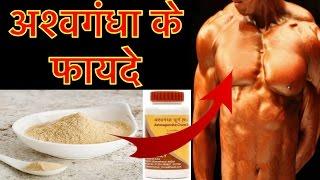 अश्वगंधा के 10 ज़बरदस्त फायदे | Ashwagandha benefits in hindi, Indian Ginseng, winter cherry