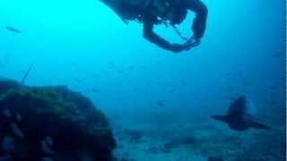 Station de nettoyage pour Mola Mola - Secret Spot