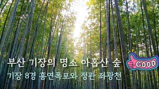 Driving in Busan/Korea/부산 기장의 …