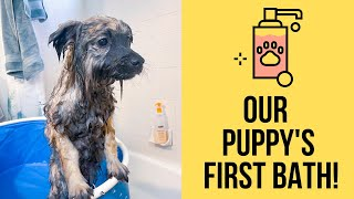 Puppy's First Bath: Tips on How to Get Your Dog to Love the Bath