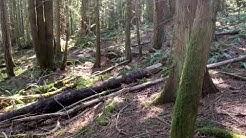 Washington state tick infestation