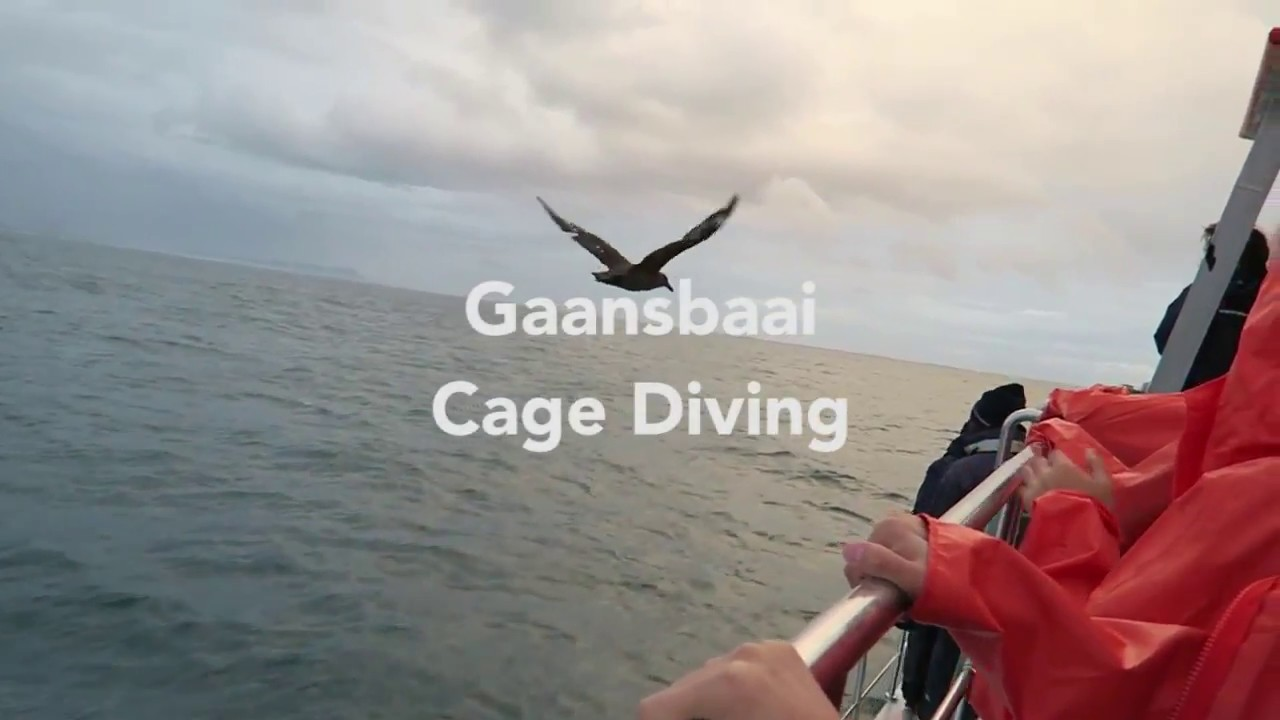 Shark Cage Diving | Cape Town Helicopter Tours