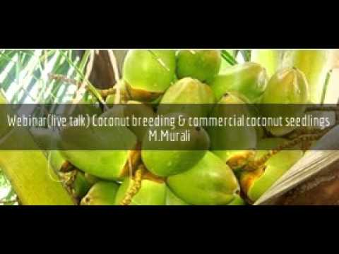 Coconut breeding and commercial coconut seedlings - Murali - www.agricultureinformation.com