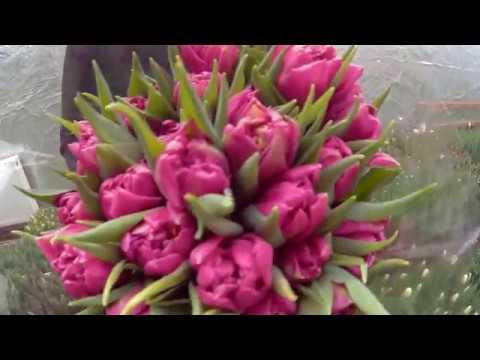 Тюльпаны более 100 наименований в ассортименте!. Тюльпаны фото каталог луковиц с доставкой от лучших интернет-магазинов.