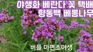 야생화판매 마당정원 다년생 공기정화식물 반려식물 플랜테…