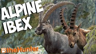 Hunting Ibex On Val-Des-Bois - theHunter 2015 PC Gameplay w/leeroy