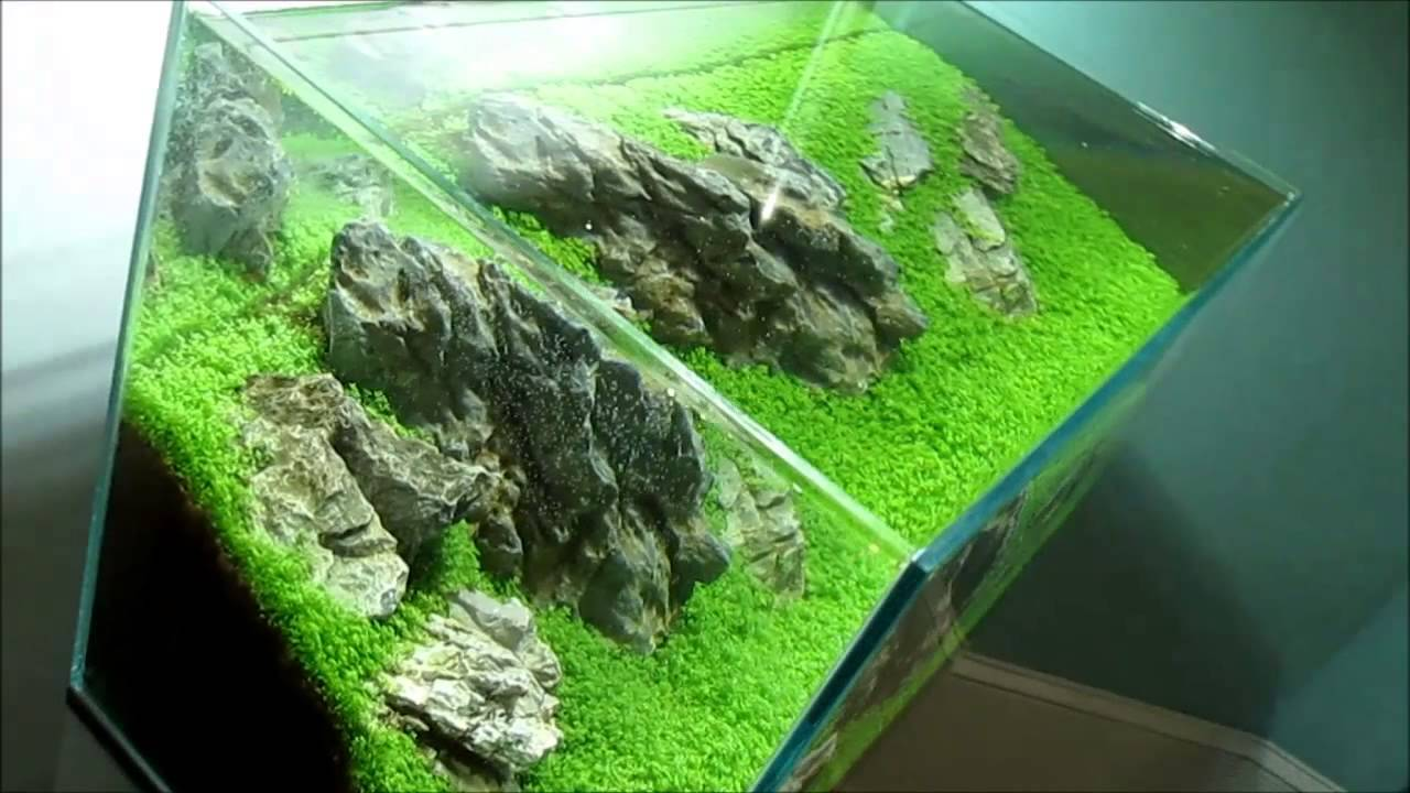 Planted aquarium hc ada 60p youtube for Ada fish tank