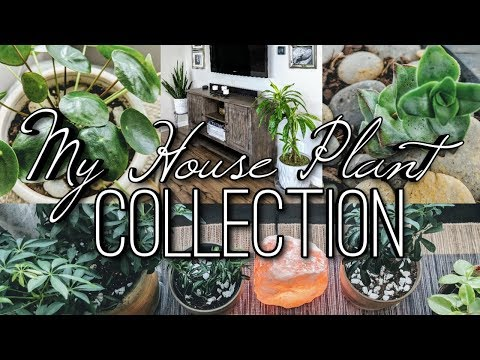 🌱My House Plant Collection-Home Tour 2019! Living Home Decor!