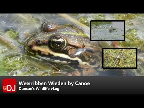 Wildlife Watching by Canoe at Weerribben Wieden | vLog #6 | Nature Travel Guide