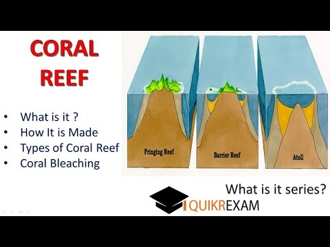coral reef and coral bleaching