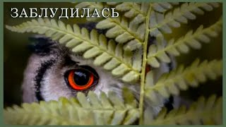 ОСЕНЬ. Лесные прогулки - Заблудилась Принцесса В Лесу