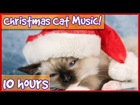 Cat and Kitten Therapy Music - Christmas Music playlist for cats - edited with popular xmas songs