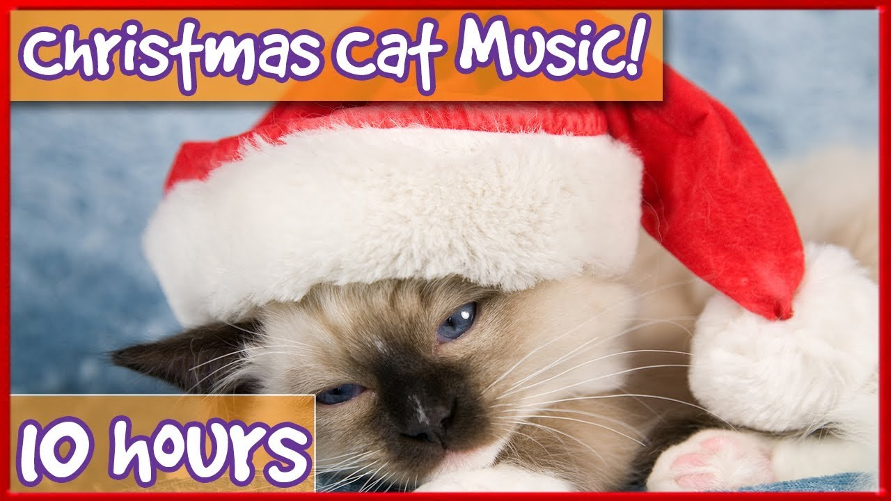 Kitten Christmas.Cat And Kitten Therapy Music Christmas Music Playlist For Cats Edited With Popular Xmas Songs