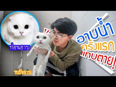 จับแมวอาบน้ำครั้งแรก!! แมวใครวะ? แทบตาย ข่วนกระจุย!