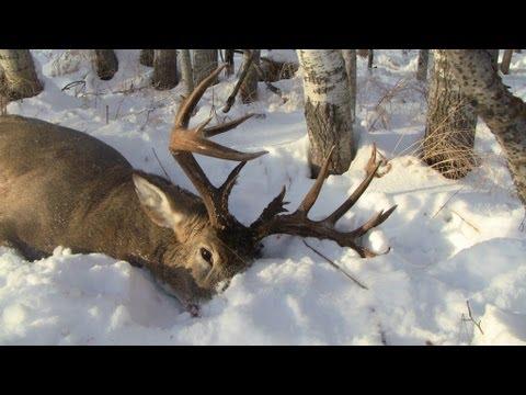 Deer Hunting 2012: 170+  Monster Buck While Pushing Bush!