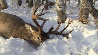 deer hunting 2012 170 monster buck while pushing bush